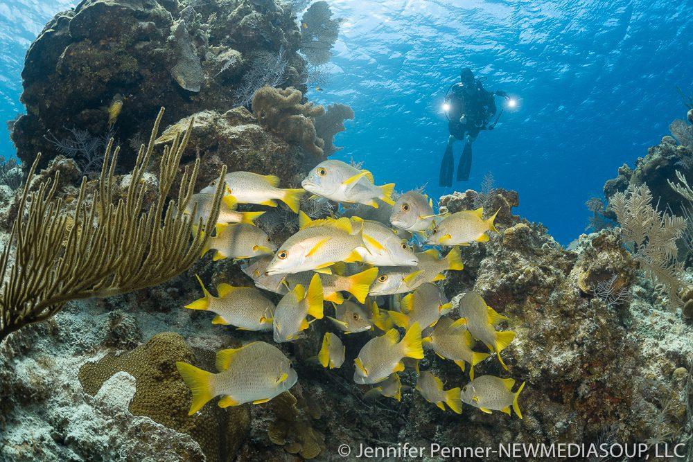 Newmediasoup-Jennifer-Penner-Little-Cayman-2019-2