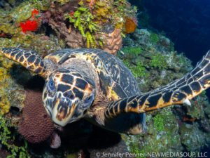 Little Cayman scuba diving and underater photography