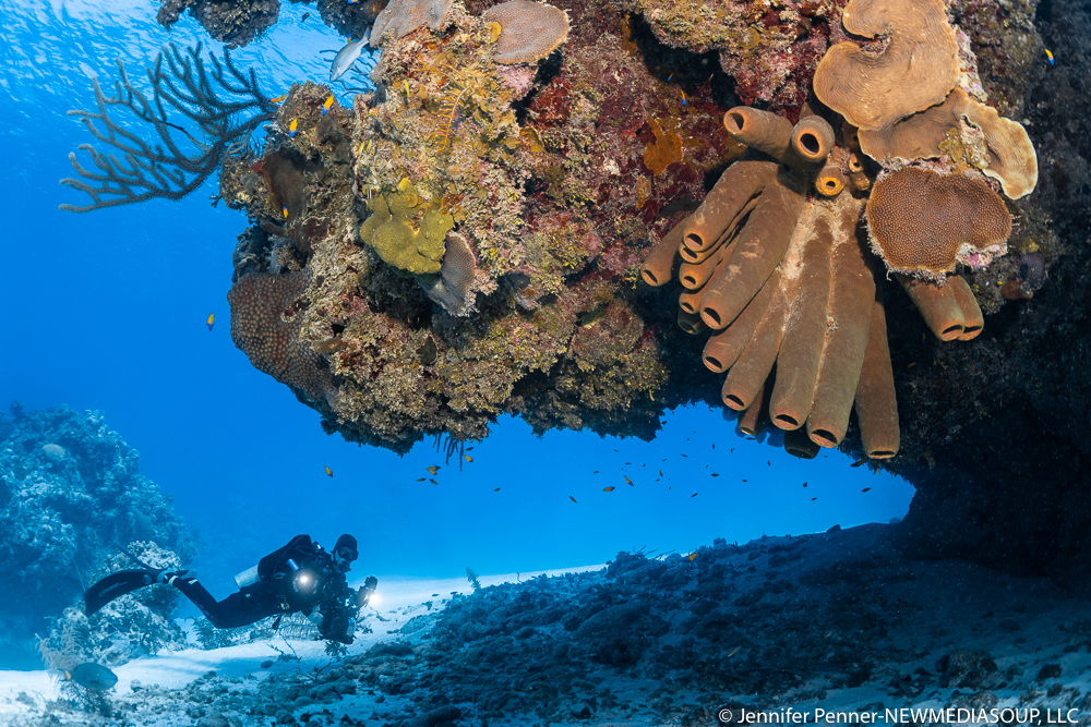 Jackson Bight reef and diver underwater in Little Cayman