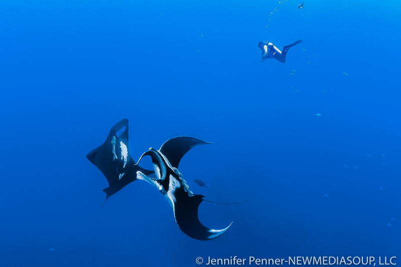 Newmediasoup-Jennifer-Penner-Revillagigedo-Socorro-Mantas-Diver-1-5508